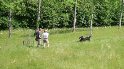 Workingtest<br><small>Combrimont/France '14</small>