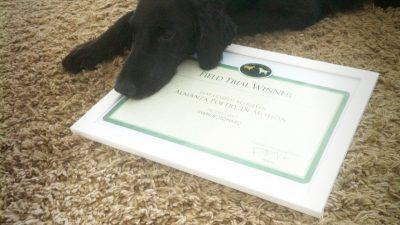 Field Trial Winner